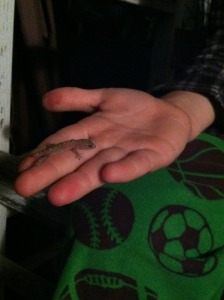 Geckos are nocturnal